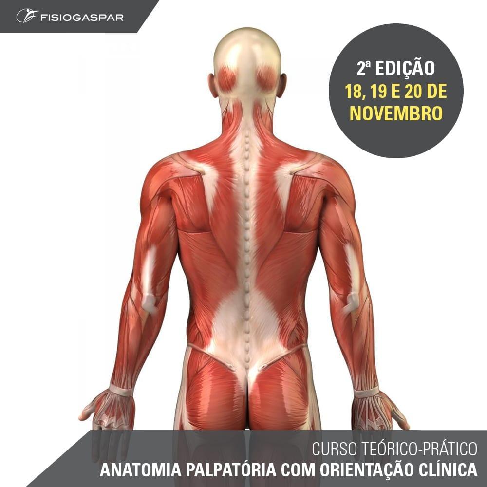 curso teórico-prático anatomia palpatoria com orientação clinica