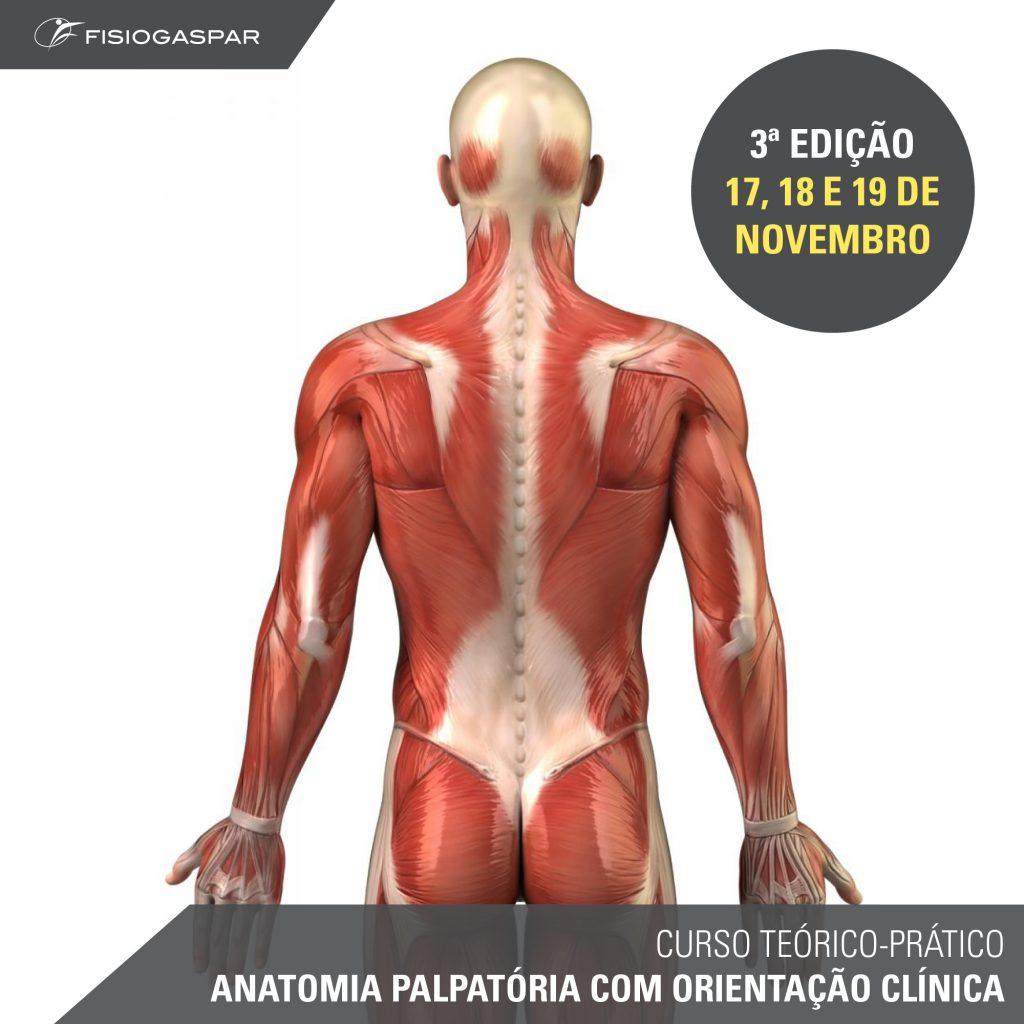 curso teórico-prático de anatomia palpatória 17 18 e 19 de dezembro