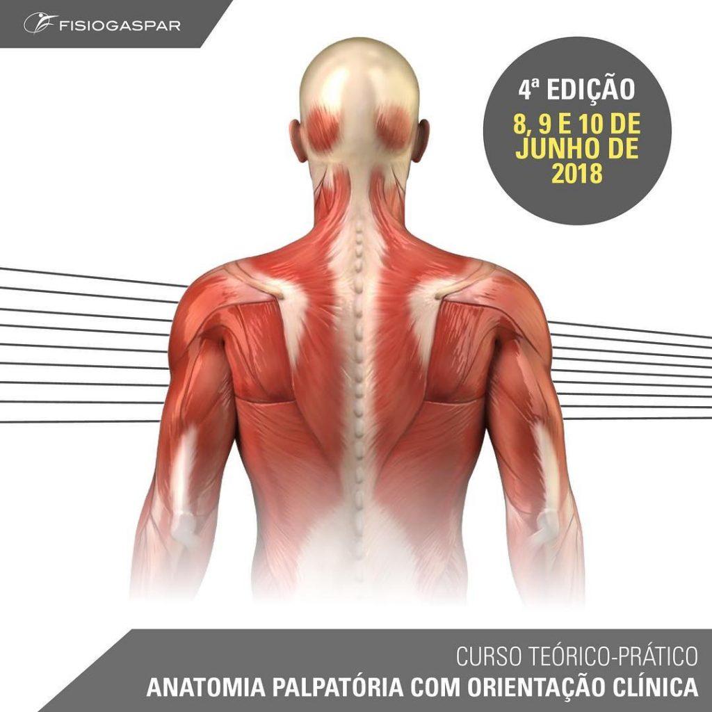 Curso teórico-prático Anatomia palpatoria com orientação